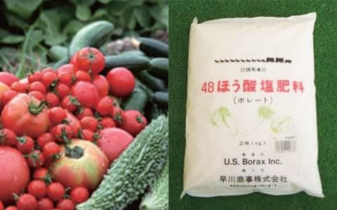 ホウ酸はすべての植物の必須微量栄養素
